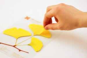 gingko leaf-its by appree