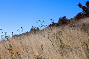 UT mts - grasses and sunflowers