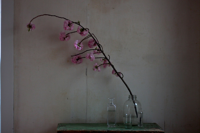 bottles and cherry branch