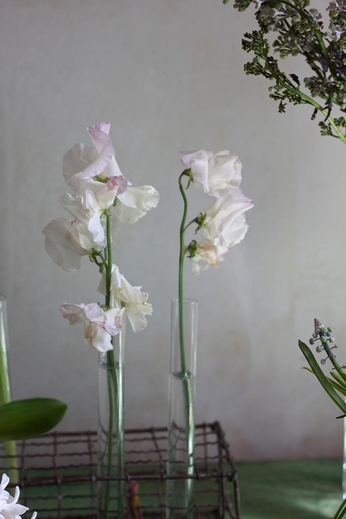 Longest-Lasting-Spring-Flowers-Sweet-Peas-Day-4-Gardenista