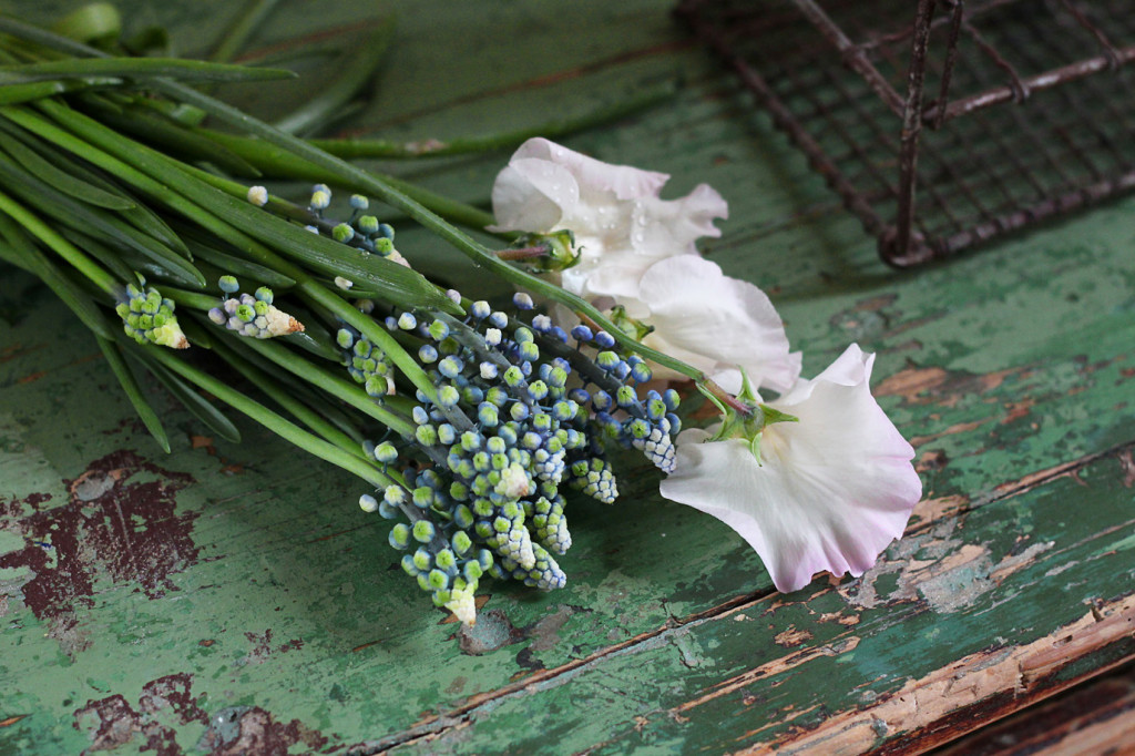 sweet peas grape hyacinths