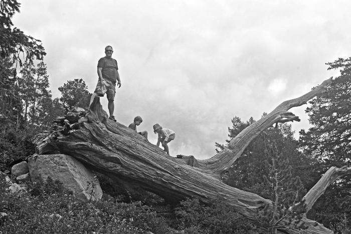log climbers