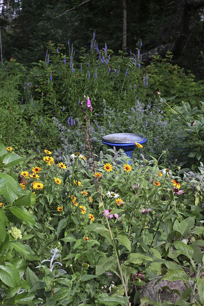 Marnie's garden flowers