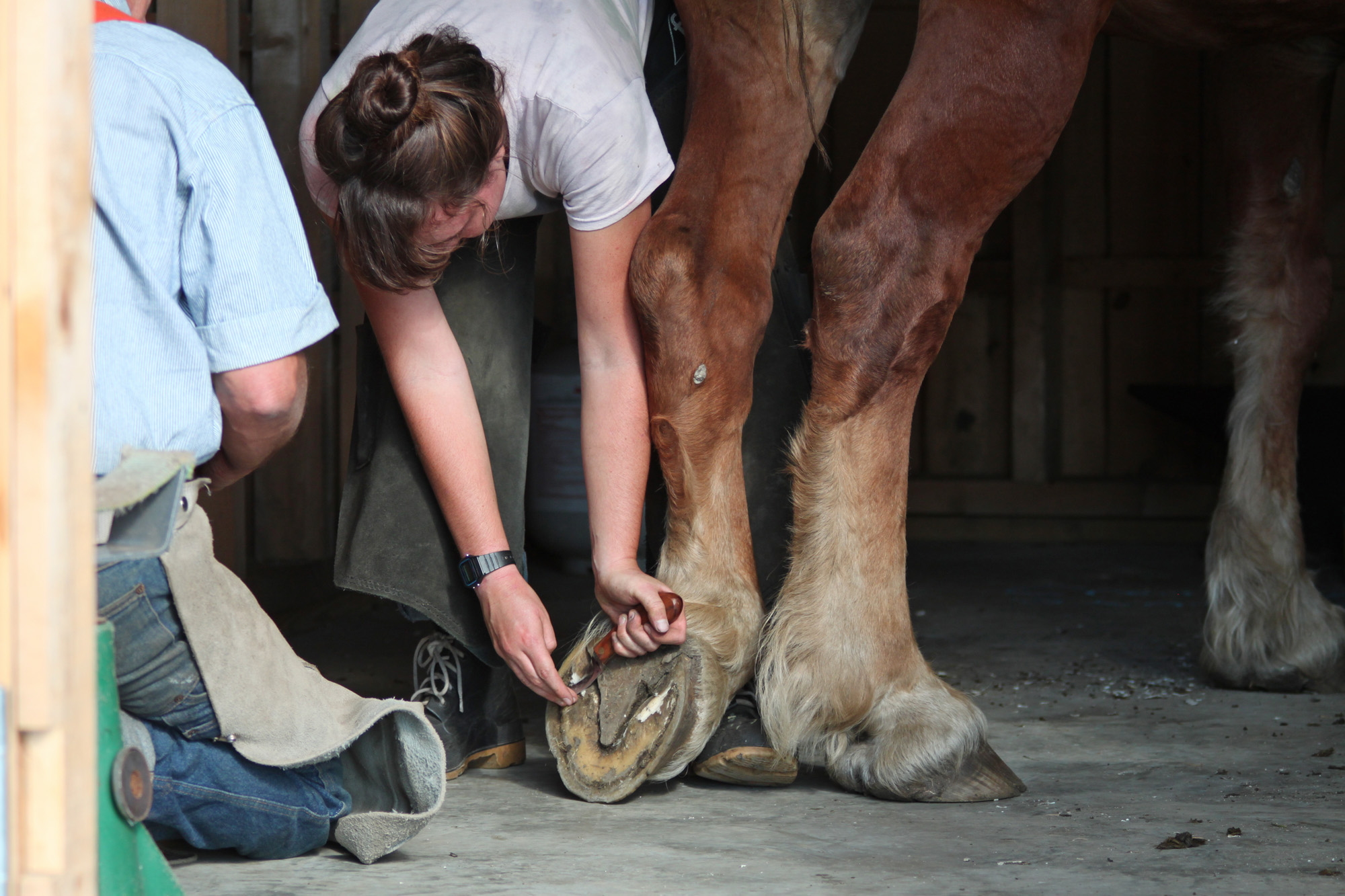 Sterling College Craftsbury Vermont, shoeing draft horses, by Justine Hand for Gardenista