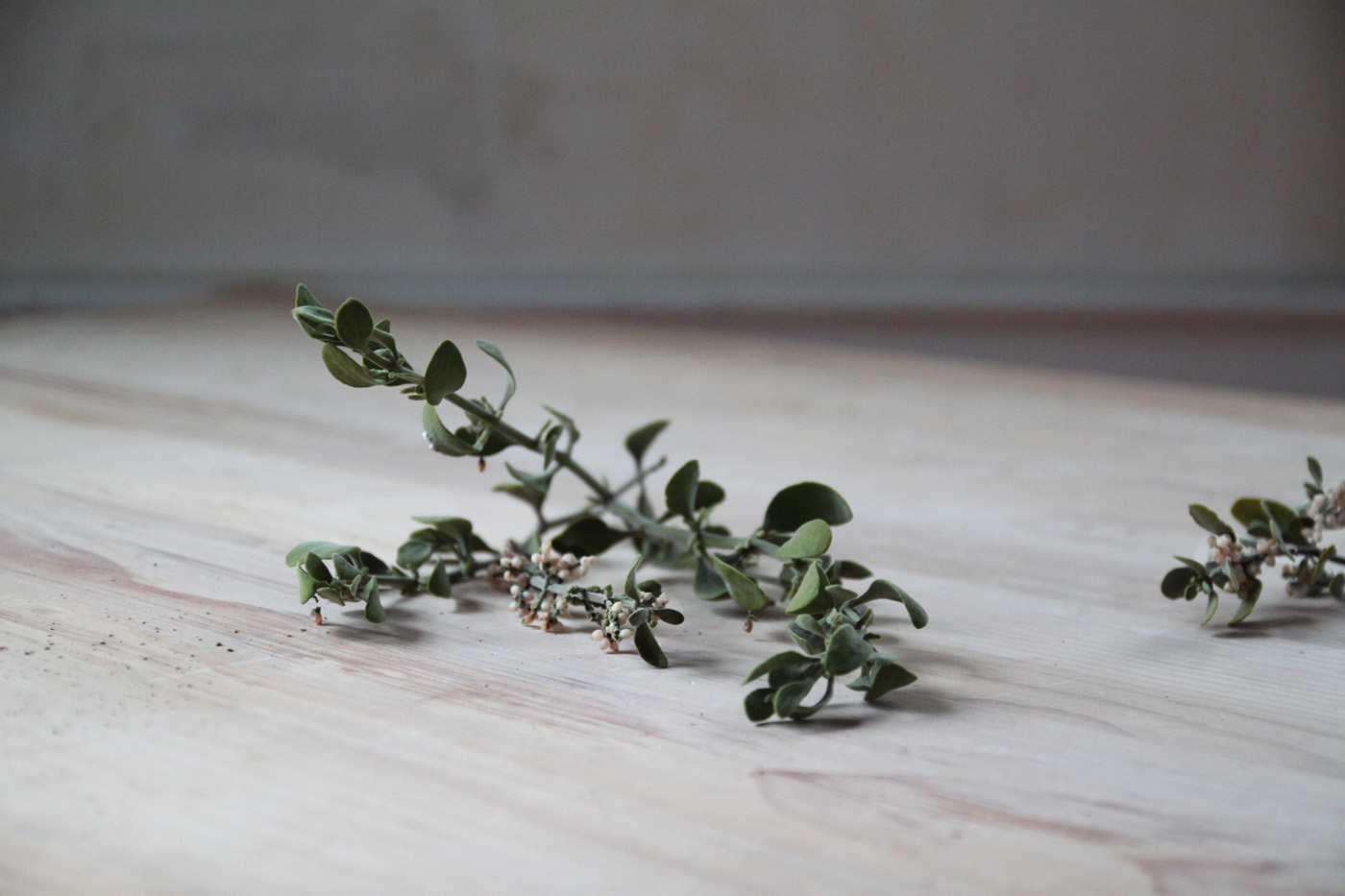 mistletoe and meyer lemon garland, mistletoe, by Justine Hand for Remodelista