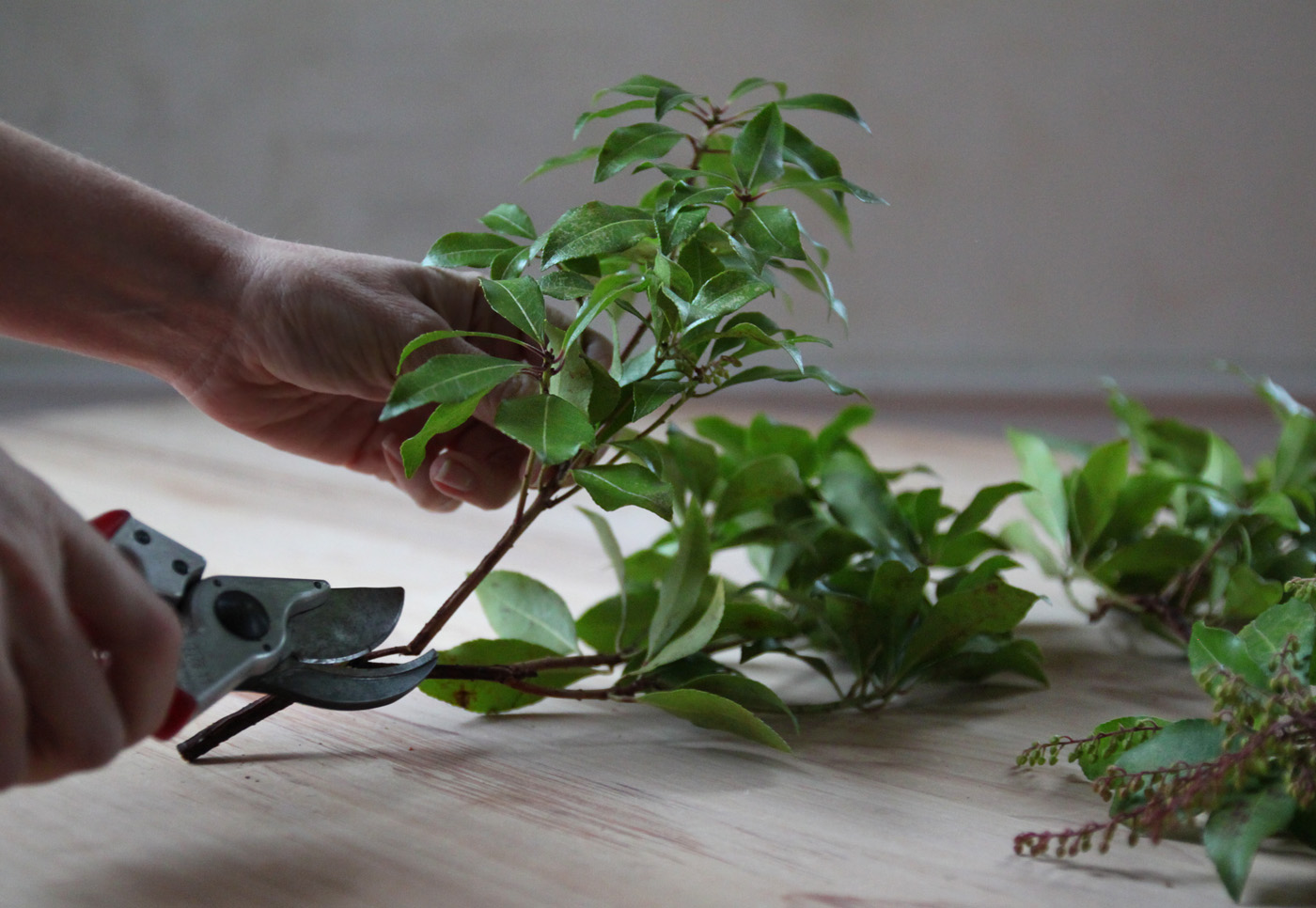 mistletoe and meyer lemon garland, trimming andromeda, by Justine Hand for Remodelista