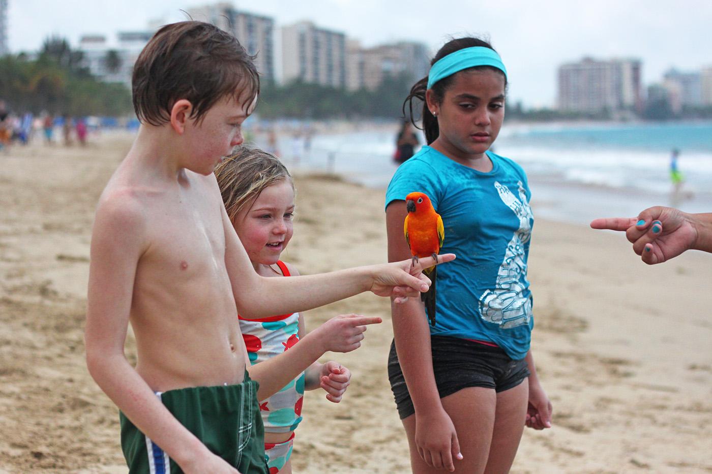 Candado Beach parrot, San Juan