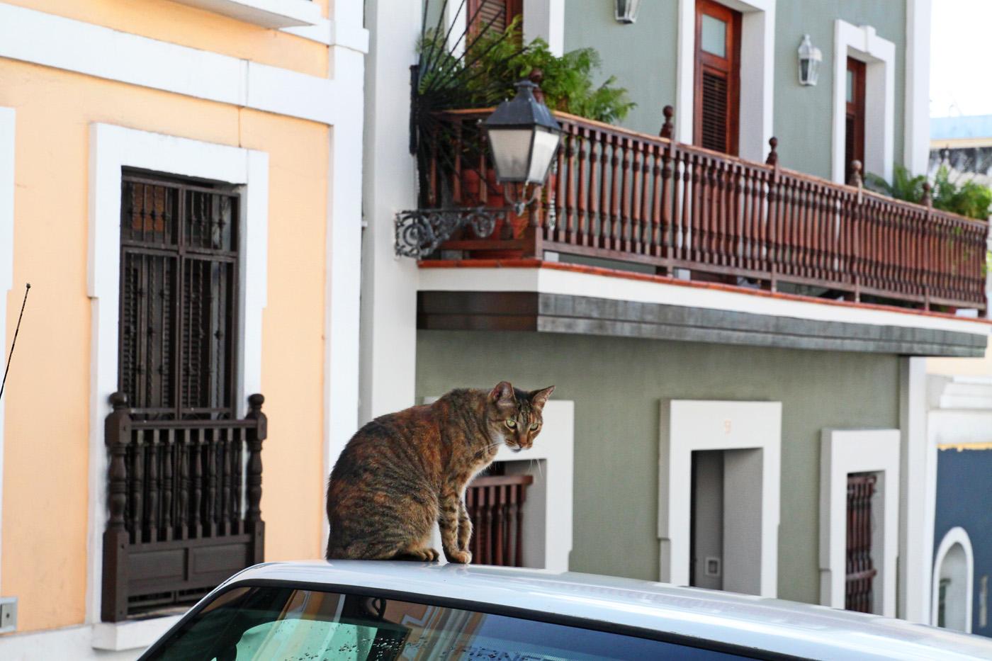 Old San Juan cat