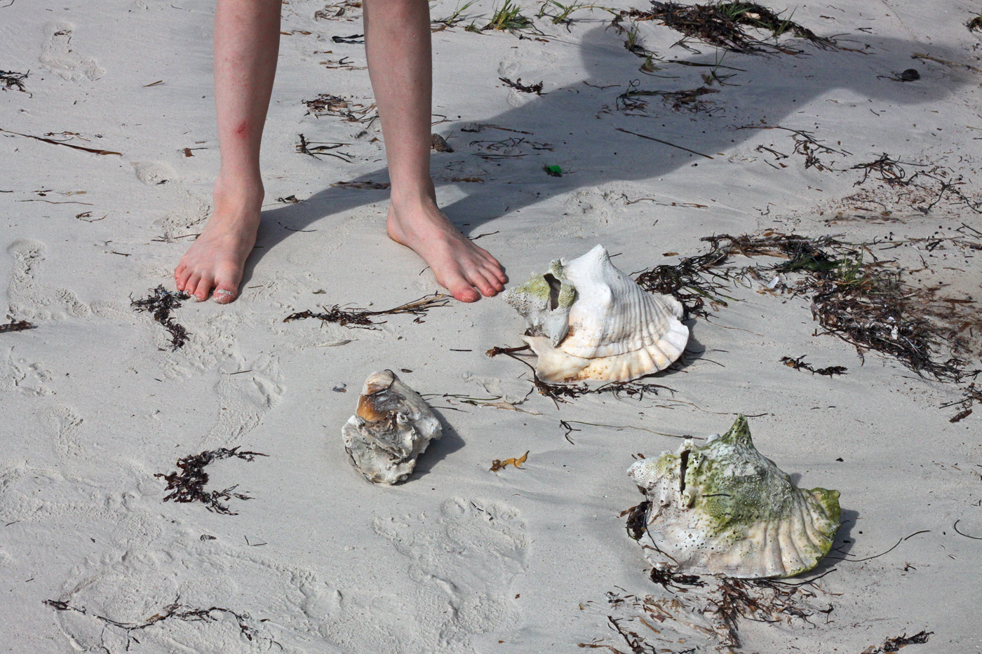 conches, vieques