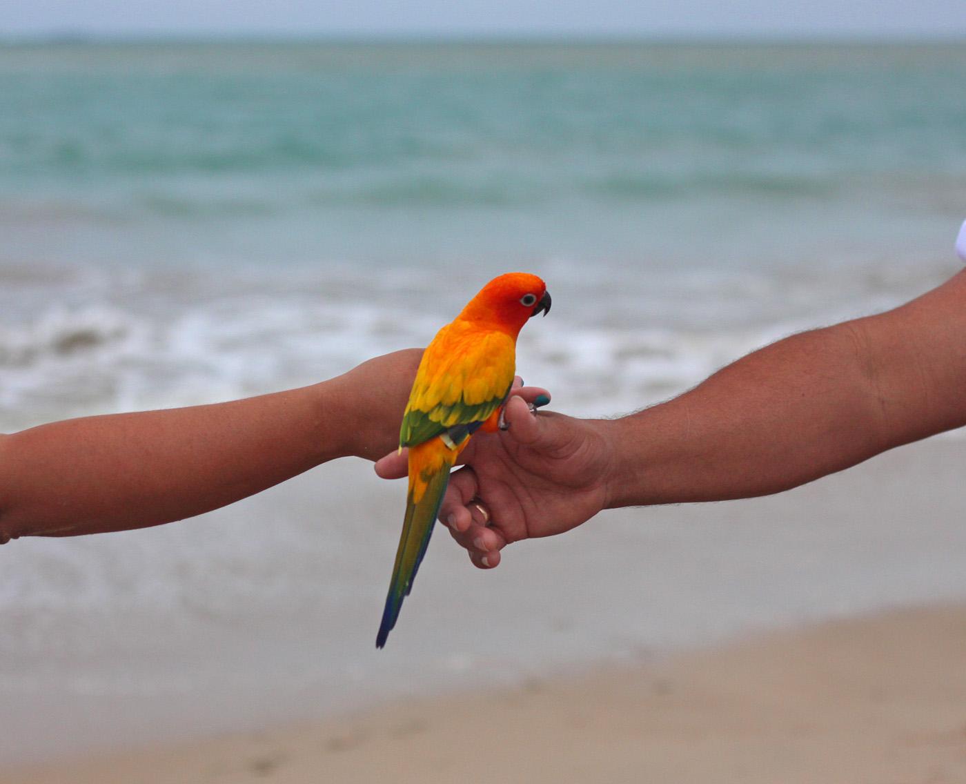 parrot 1, San Juan