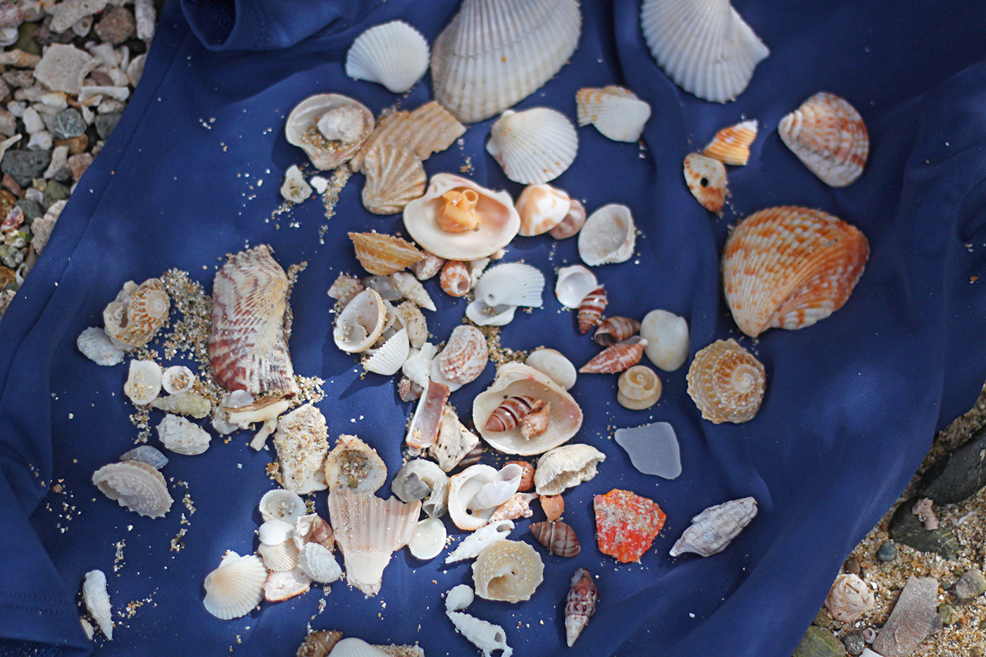 shell collecting vieques