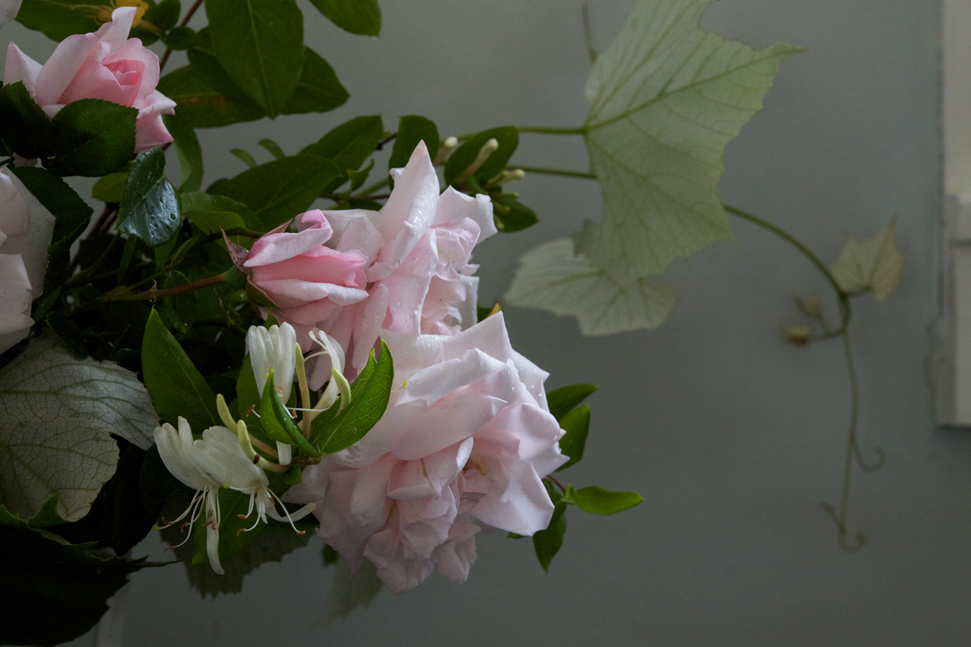 New Dawn Rose Bouquet, detail roses, by Justine Hand for Gardenista