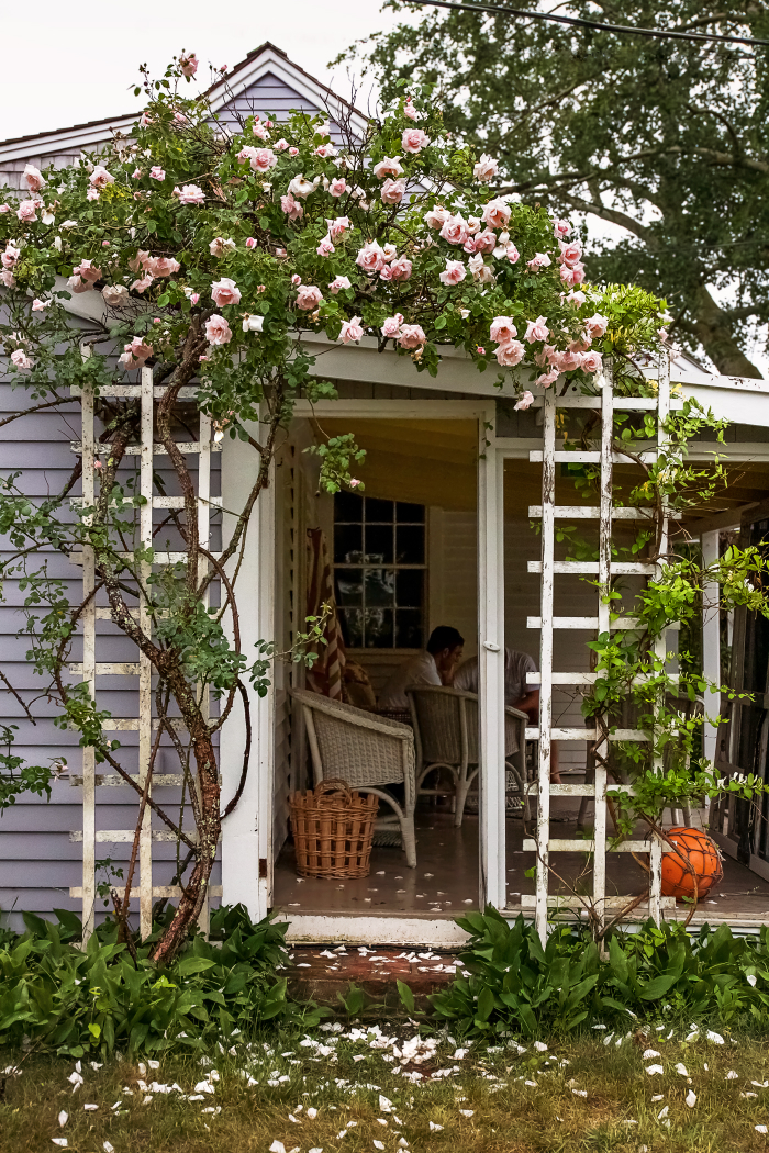 New dawn bouquet, Salt Timber Cottage covered in roses, by Justine Hand for Gardenista