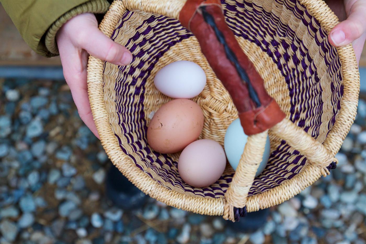 Sarah's eggs